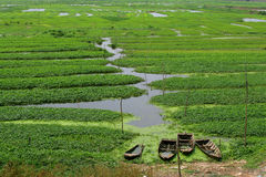 Sunken work boats. Four old wooden boats sunken at the edge of a flooded crop field Royalty Free Stock Photo