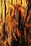 Sunkissed Bark Stock Image