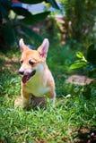 Sunkissed y el perro Fotografía de archivo libre de regalías