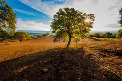 Sunkissedheuvels en bomen met blauwe hemel stock foto's