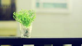 一个花瓶的绿色小植物在早晨sunlig的阳台 库存图片