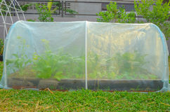 新鲜蔬菜在有网的被上升的床庭院里在早晨sunligh 免版税库存照片