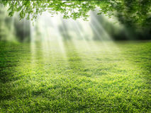 Sunlight Stock Photo