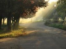 Sunlight. Morning mist sunlight in the park Stock Images