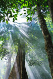 Sunlight. Through the trees, Thailand Royalty Free Stock Images