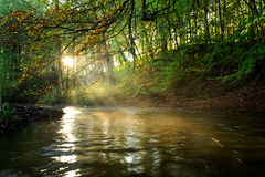 Sunlight. Through the trees by the river Royalty Free Stock Images