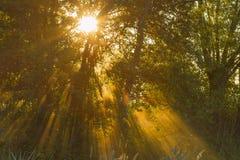sunlight Стоковые Фотографии RF