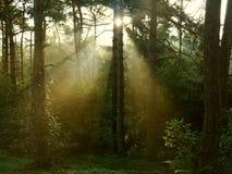 sunlight Zdjęcie Stock