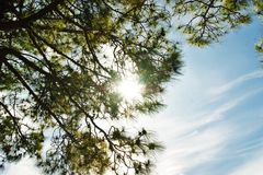 sunlight Imagem de Stock Royalty Free