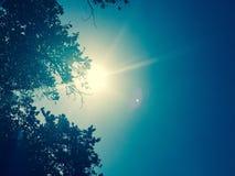 sunlight Photos libres de droits