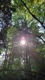 sunlight Fotografia Stock Libera da Diritti