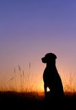 Sunlight. A dog sitting in to the sunlight royalty free stock photos