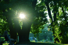 sunlight Стоковое Фото