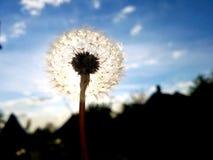 sunlight Стоковое Изображение RF