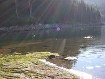 sunlight Photographie stock