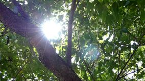 sunlight video d archivio
