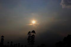 sunlight Photographie stock libre de droits