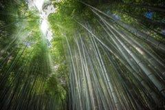 Sunlight in Arashiyama Bamboo forest, Kyoto, Japan. Sunlight in Arashiyama Bamboo grove, Kyoto, Japan Stock Photos