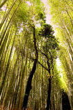 Sunlight at Arashiyama Bamboo Grove, Kyoto, Japan Royalty Free Stock Images