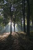 Sunlight in Autumn. Sun shines true the trees in autumn in a Belgian forest Stock Photo