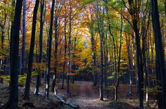 Sunlight in autumn forest stock photography