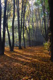 Sunlight in autumn wood Stock Photos