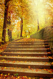 Sunlight in autumnal park Royalty Free Stock Image