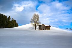 Sunlight on barn and bare tree on hill in snowy winter landscape and fir forest in South Germany.