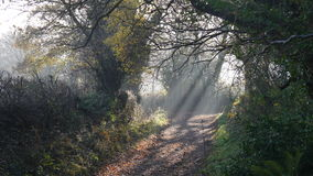 Sunlight beams filtering through trees Stock Photography