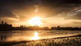 Sunlight from behind Clouds over Water Rice Fields at Sunset stock video