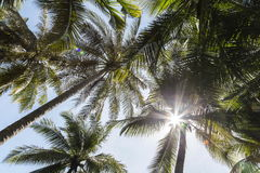 Sunlight behind coconut tree top at the island Royalty Free Stock Photo