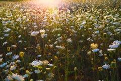 Sunlight behind grass Stock Photos