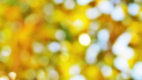 The Sunlight and  Bokeh in Yellow Theme. The bokeh of sunlight pass through the tree Stock Photo