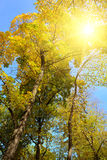 Sunlight through branches Royalty Free Stock Image