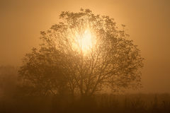 Sunlight through the branches of a lone tree Stock Photo