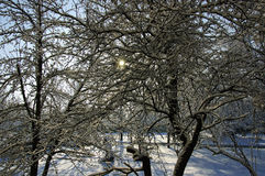Sunlight through the branches Royalty Free Stock Photography