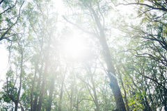 Sunlight Through the Branches Royalty Free Stock Photo