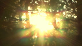 Sunlight Breaking Through The Branches. Sunlight Through Trees And Into The Woods stock video