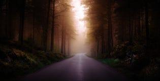 Sunlight breaking through the mist Stock Image