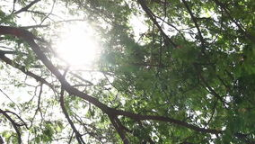 Sunlight breaking through tree stock video footage