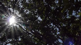Sunlight breaking through trees stock video footage