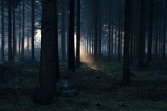 Sunlight breaking through the trees in Hooghalen Stock Photography