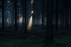 Sunlight breaking through the trees in Hooghalen Royalty Free Stock Image