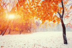 Sunlight breaks through the autumn leaves of the trees in the ea royalty free stock photography