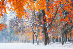Sunlight breaks through the autumn leaves of the trees in the ea. Rly days of winter Stock Photo