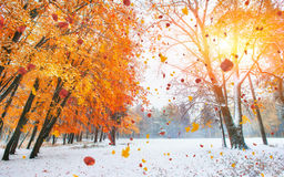 Sunlight breaks through the autumn leaves of the trees. In the early days of winter royalty free stock photos