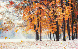 Sunlight breaks through the autumn leaves of the trees stock photography