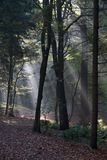 Sunlight breaks through the forest of the Spaarbankbos in Hoogeveen Stock Photo