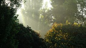 The sunlight that breaks through the green thickets. Royalty Free Stock Photos