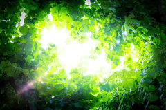 Sunlight breaks through the leaves Stock Photography